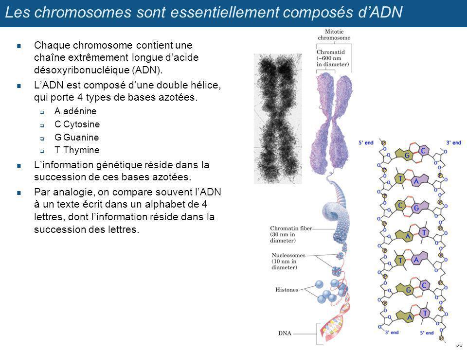 Les chromosomes sont essentiellement composés dADN Chaque chromosome contient une chaîne extrêmement longue dacide désoxyribonucléique (ADN). LADN est