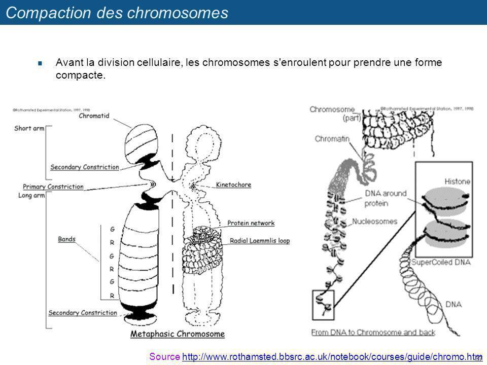 Compaction des chromosomes Avant la division cellulaire, les chromosomes s'enroulent pour prendre une forme compacte. 37 Source http://www.rothamsted.