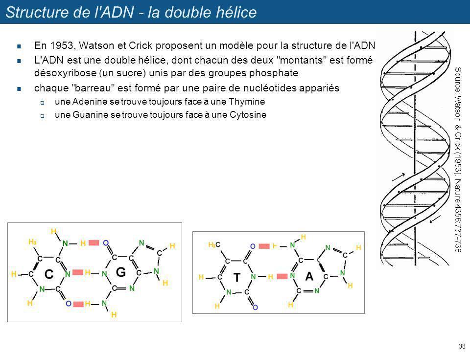 Structure de l'ADN - la double hélice En 1953, Watson et Crick proposent un modèle pour la structure de l'ADN. L'ADN est une double hélice, dont chacu
