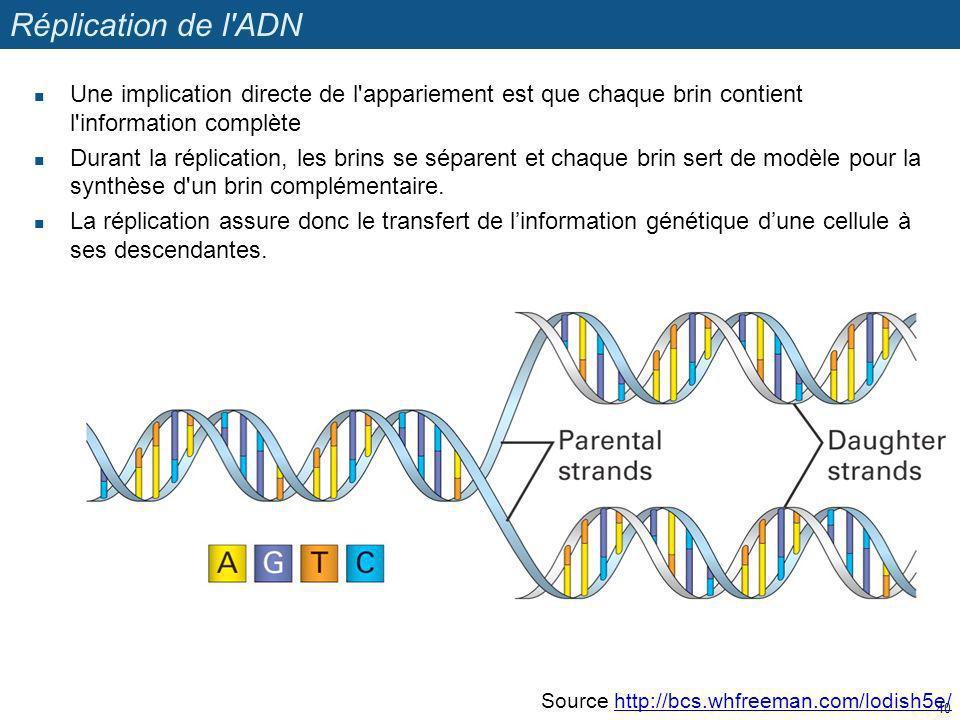 Réplication de l'ADN Une implication directe de l'appariement est que chaque brin contient l'information complète Durant la réplication, les brins se