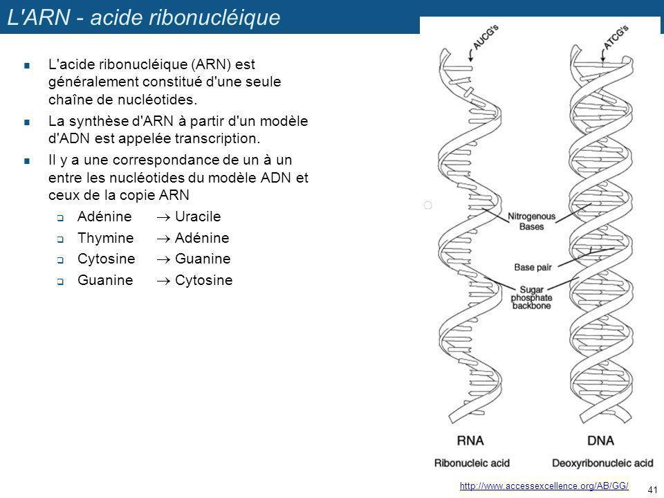 L'ARN - acide ribonucléique L'acide ribonucléique (ARN) est généralement constitué d'une seule chaîne de nucléotides. La synthèse d'ARN à partir d'un