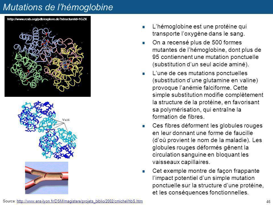 Mutations de lhémoglobine Lhémoglobine est une protéine qui transporte loxygène dans le sang. On a recensé plus de 500 formes mutantes de lhémoglobine