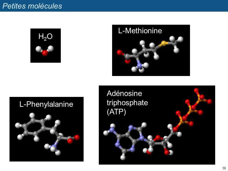 Petites molécules 58 L-Phenylalanine Adénosine triphosphate (ATP) H2OH2O L-Methionine