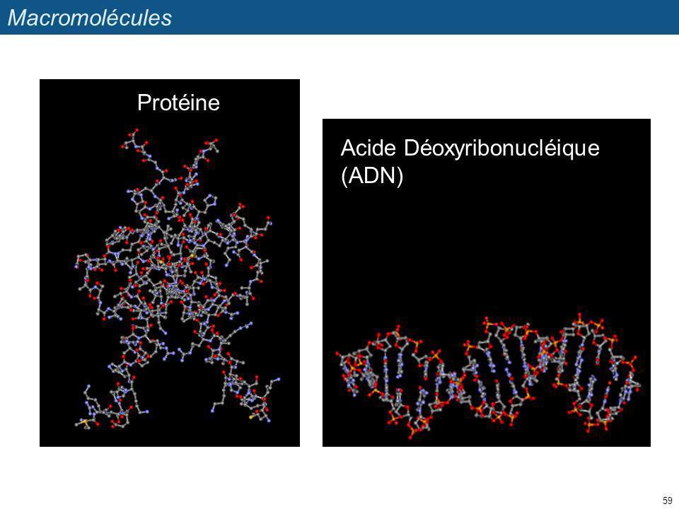 Macromolécules 59 Protéine Acide Déoxyribonucléique (ADN)