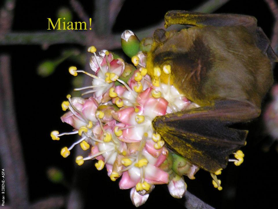 Miam! Photos : B.IBENE - ASFA