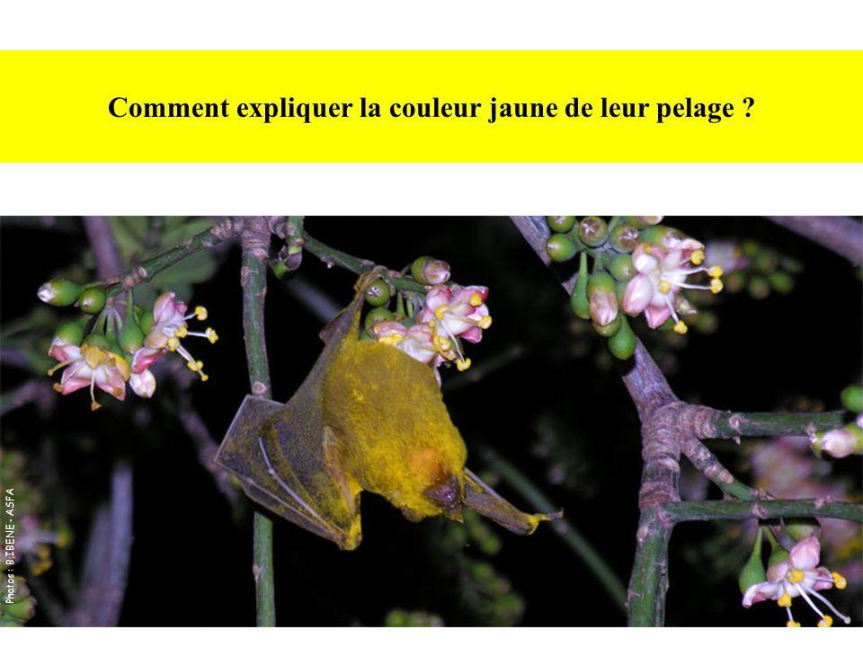 Comment expliquer la couleur jaune de leur pelage ? Photos : B.IBENE - ASFA