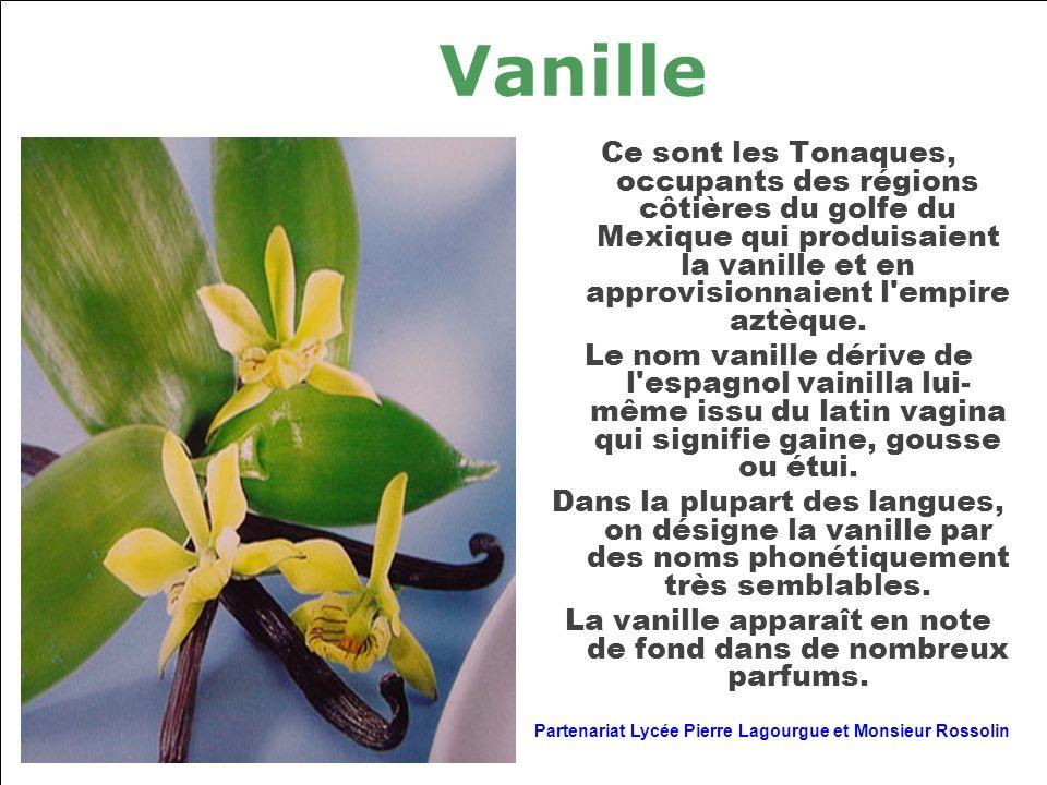 Vanille Ce sont les Tonaques, occupants des régions côtières du golfe du Mexique qui produisaient la vanille et en approvisionnaient l'empire aztèque.