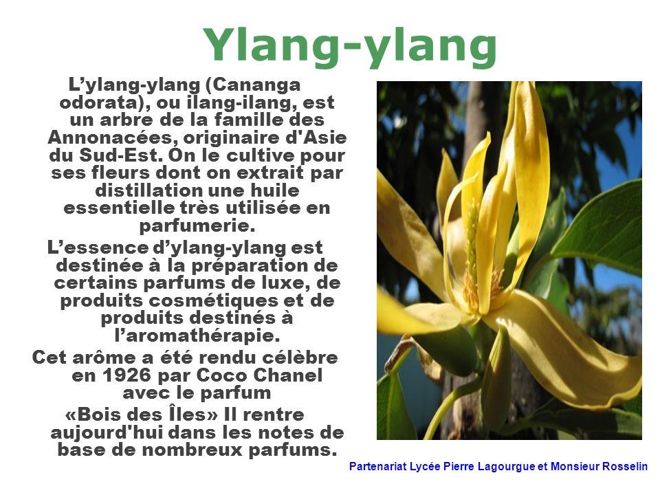Ylang-ylang Lylang-ylang (Cananga odorata), ou ilang-ilang, est un arbre de la famille des Annonacées, originaire d'Asie du Sud-Est. On le cultive pou