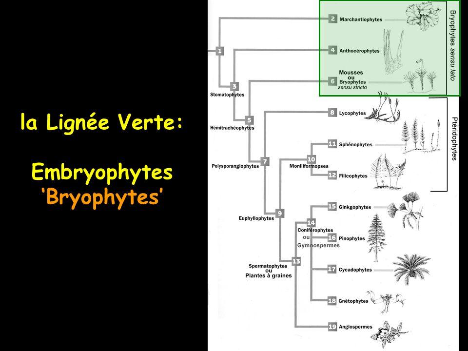 la Lignée Verte: Embryophytes Bryophytes