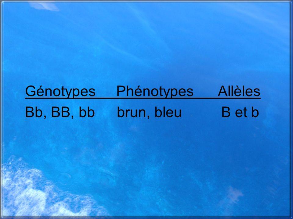 Génotypes Phénotypes Allèles Bb, BB, bb brun, bleu B et b