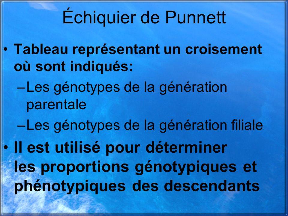 Échiquier de Punnett Tableau représentant un croisement où sont indiqués: –Les génotypes de la génération parentale –Les génotypes de la génération fi