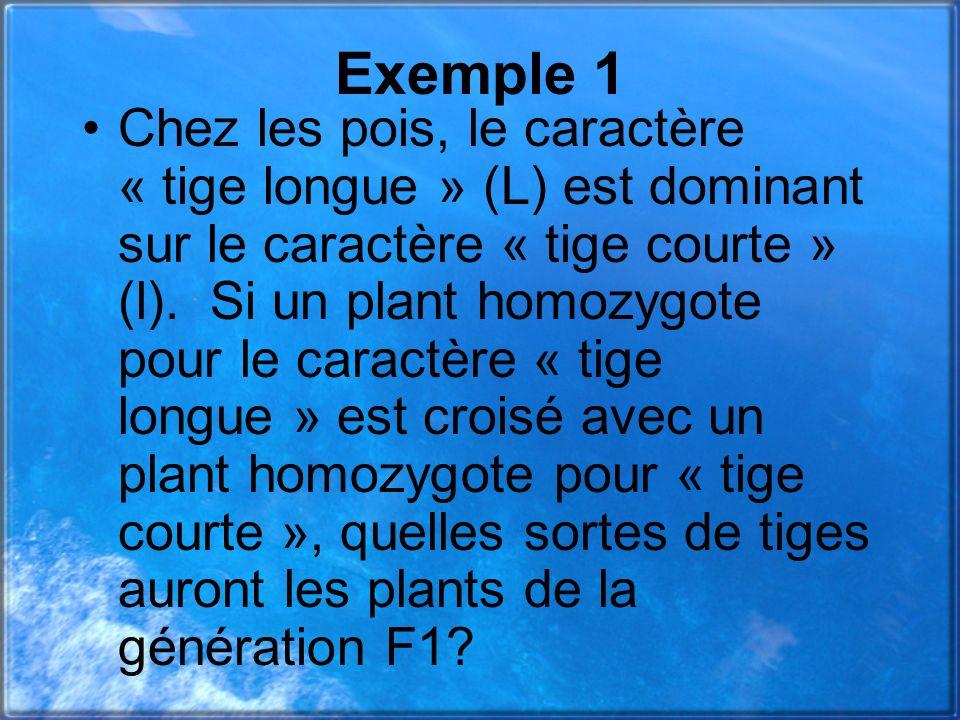 Exemple 1 Chez les pois, le caractère « tige longue » (L) est dominant sur le caractère « tige courte » (l). Si un plant homozygote pour le caractère