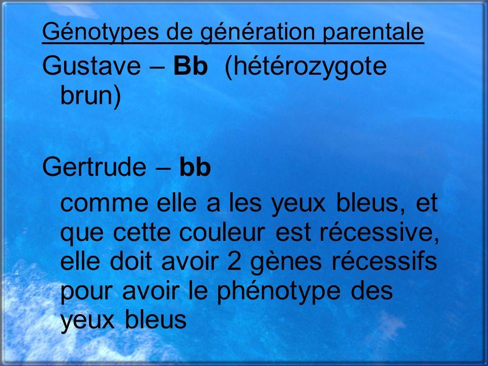 Génotypes de génération parentale Gustave – Bb (hétérozygote brun) Gertrude – bb comme elle a les yeux bleus, et que cette couleur est récessive, elle