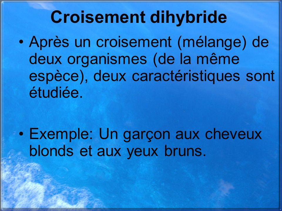 Croisement dihybride Après un croisement (mélange) de deux organismes (de la même espèce), deux caractéristiques sont étudiée. Exemple: Un garçon aux