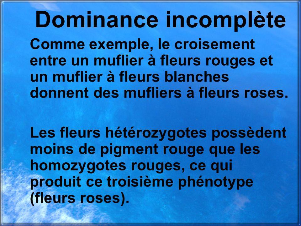 Dominance incomplète Comme exemple, le croisement entre un muflier à fleurs rouges et un muflier à fleurs blanches donnent des mufliers à fleurs roses