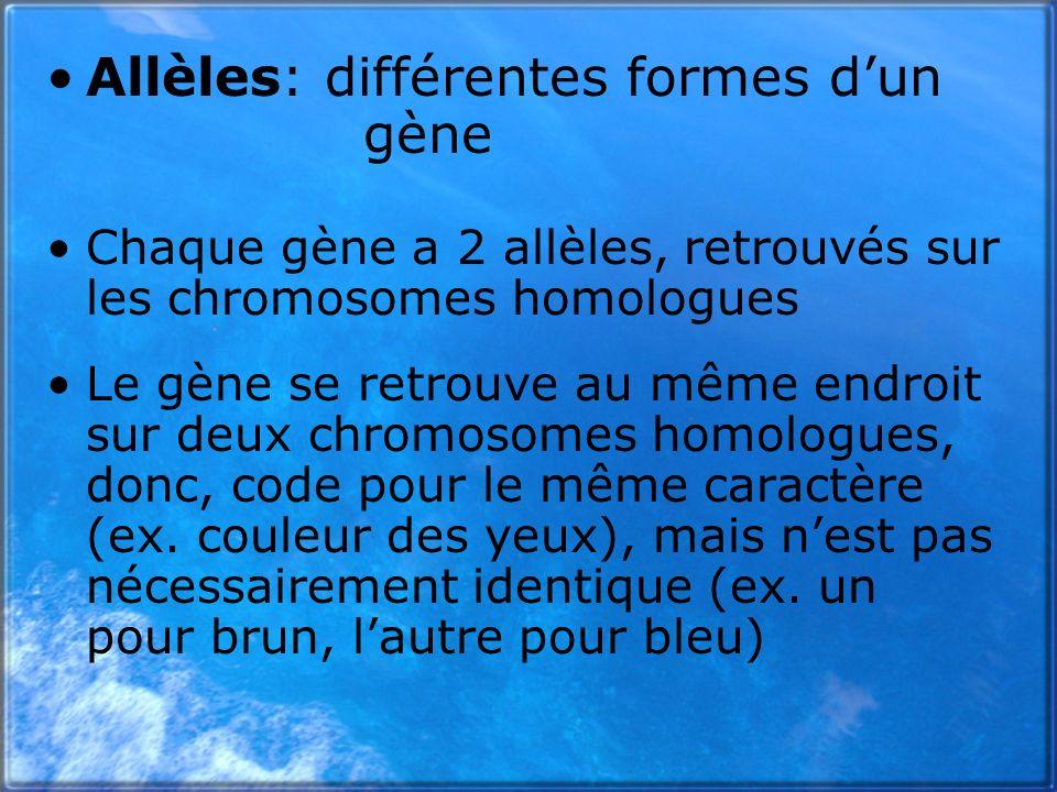 Allèles: différentes formes dun gène Chaque gène a 2 allèles, retrouvés sur les chromosomes homologues Le gène se retrouve au même endroit sur deux ch