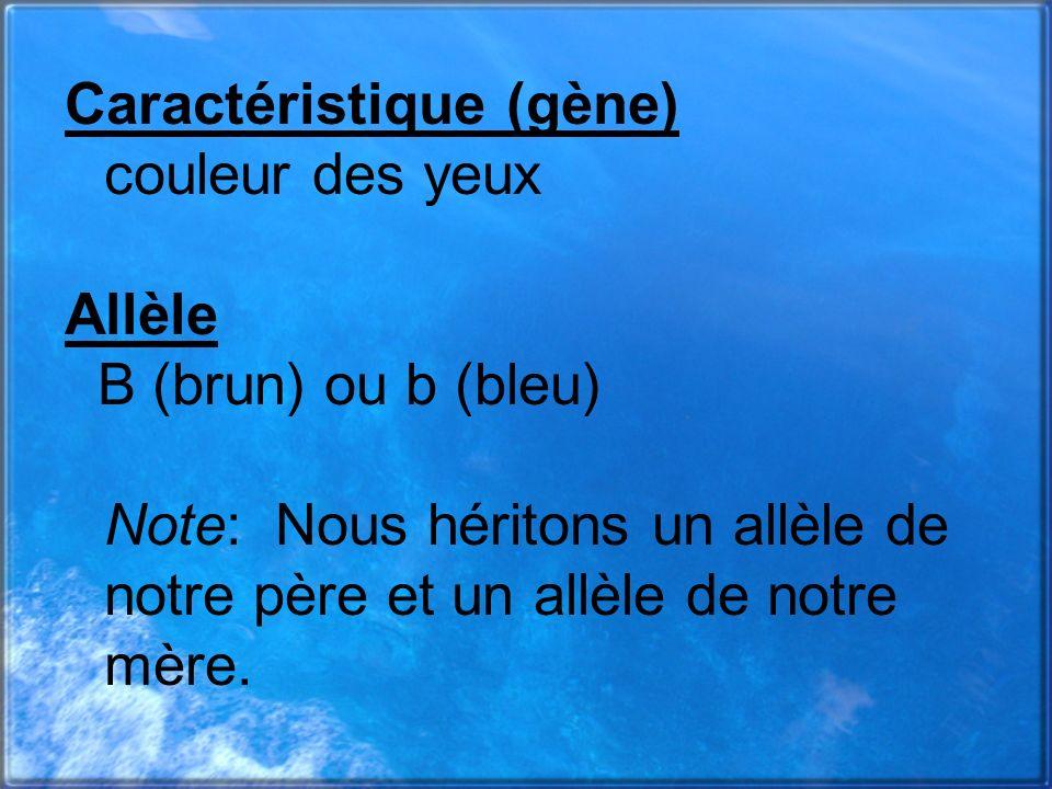Caractéristique (gène) couleur des yeux Allèle B (brun) ou b (bleu) Note:Nous héritons un allèle de notre père et un allèle de notre mère.