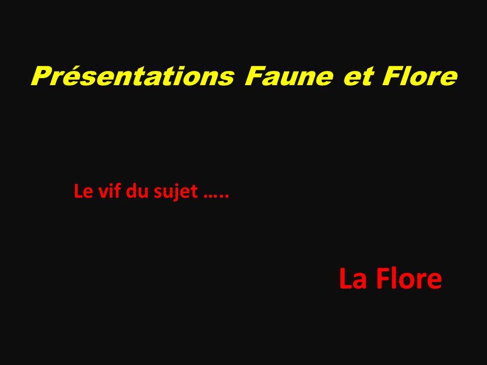 Présentations Faune et Flore Le vif du sujet ….. La Flore