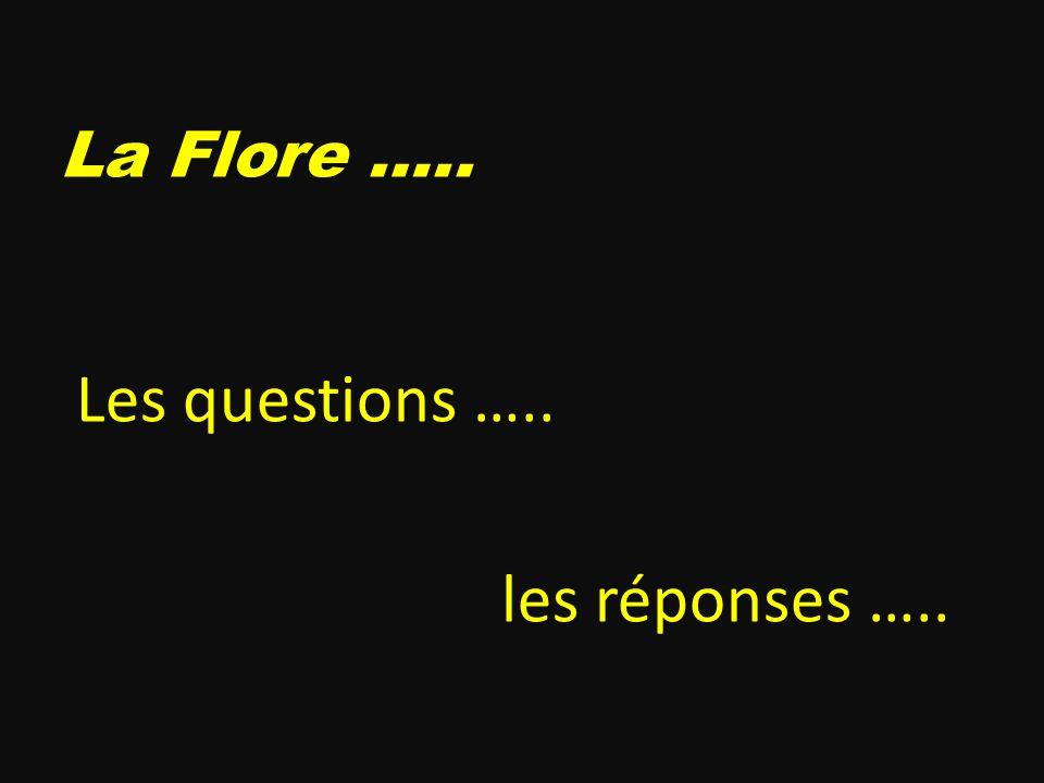 La Flore ….. Les questions ….. les réponses …..