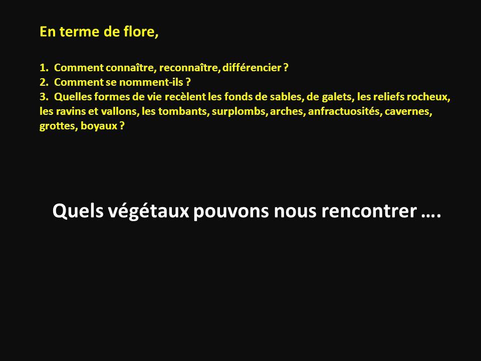Quels végétaux pouvons nous rencontrer …. En terme de flore, 1. Comment connaître, reconnaître, différencier ? 2. Comment se nomment-ils ? 3. Quelles