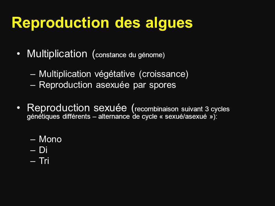 Reproduction des algues Multiplication ( constance du génome) –Multiplication végétative (croissance) –Reproduction asexuée par spores Reproduction sexuée ( recombinaison suivant 3 cycles génétiques différents – alternance de cycle « sexué/asexué »): –Mono –Di –Tri