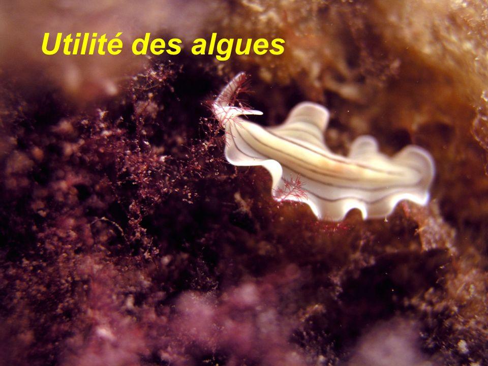 Utilité des algues