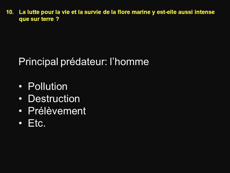 10.La lutte pour la vie et la survie de la flore marine y est-elle aussi intense que sur terre ? Principal prédateur: lhomme Pollution Destruction Pré