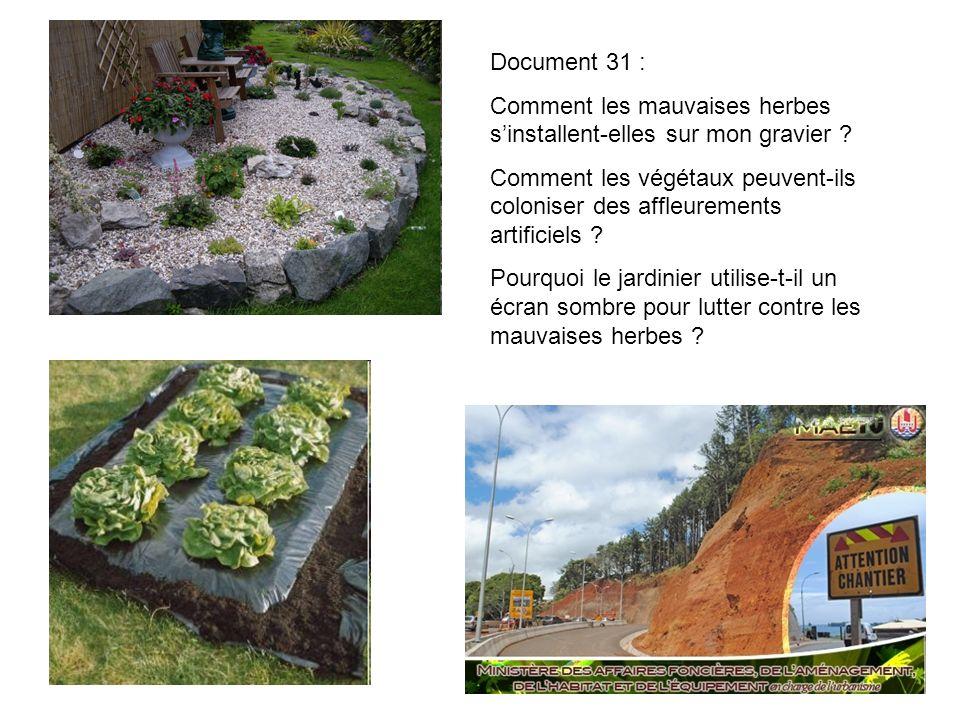 Document 31 : Comment les mauvaises herbes sinstallent-elles sur mon gravier ? Comment les végétaux peuvent-ils coloniser des affleurements artificiel