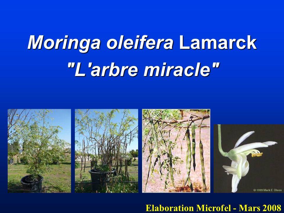 L huile de Moringa Oleifera Elaboré par Microfel L huile est extraite des graines : Huile de Ben (absence d odeur et rancissement lent) L huile est extraite des graines : Huile de Ben (absence d odeur et rancissement lent) Composition : Composition : 3.1 % acide palmitique 8 % acide stéarique 3.1 % acide palmitique 8 % acide stéarique 71 % acide oléique 7.8 % acide arachidique 71 % acide oléique 7.8 % acide arachidique 3.5 % acide béhénique 5.8 % acide lignocérique 3.5 % acide béhénique 5.8 % acide lignocérique