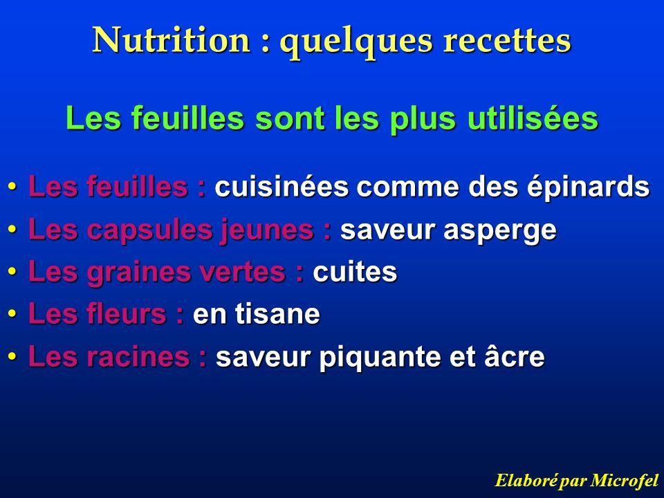 Nutrition : quelques recettes Les feuilles sont les plus utilisées Les feuilles : cuisinées comme des épinardsLes feuilles : cuisinées comme des épina