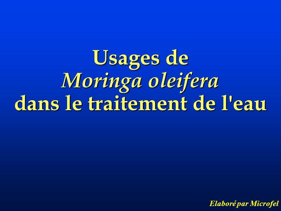 Usages de Moringa oleifera dans le traitement de l'eau Elaboré par Microfel