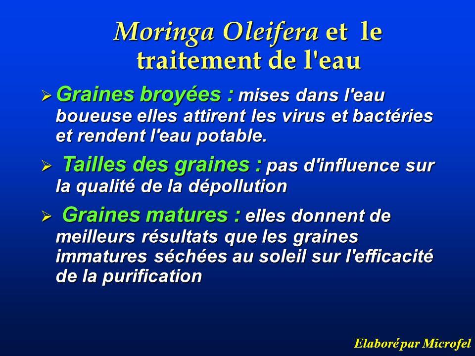 Moringa Oleifera et le traitement de l'eau Elaboré par Microfel Graines broyées : mises dans l'eau boueuse elles attirent les virus et bactéries et re