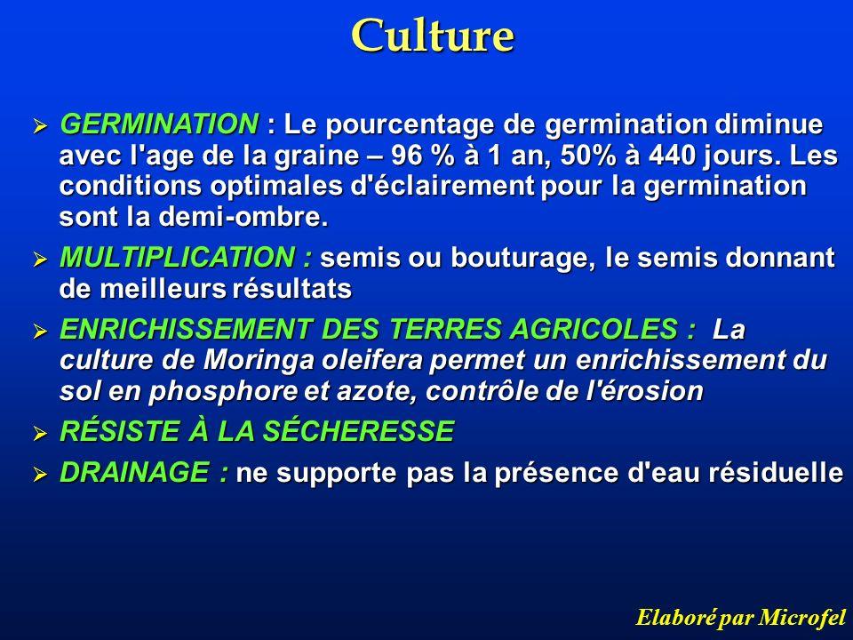 Culture Elaboré par Microfel GERMINATION : Le pourcentage de germination diminue avec l'age de la graine – 96 % à 1 an, 50% à 440 jours. Les condition