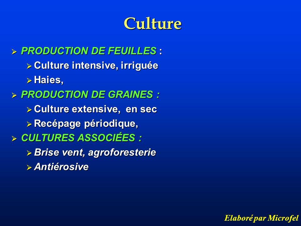 Culture Elaboré par Microfel PRODUCTION DE FEUILLES : PRODUCTION DE FEUILLES : Culture intensive, irriguée Culture intensive, irriguée Haies, Haies, P