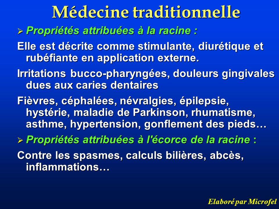 Médecine traditionnelle Elaboré par Microfel Propriétés attribuées à la racine : Propriétés attribuées à la racine : Elle est décrite comme stimulante