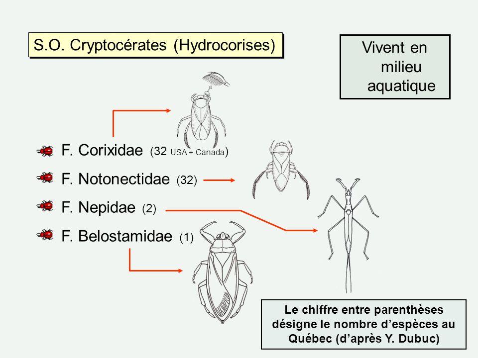 S.O. Cryptocérates (Hydrocorises) F. Corixidae (32 USA + Canada ) F. Notonectidae (32) F. Nepidae (2) F. Belostamidae (1) Vivent en milieu aquatique L
