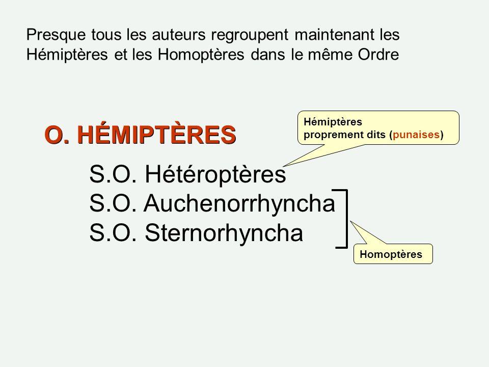 O. HÉMIPTÈRES S.O. Hétéroptères S.O. Auchenorrhyncha S.O. Sternorhyncha Hémiptères proprement dits (punaises) Homoptères Presque tous les auteurs regr