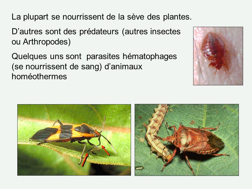 La plupart se nourrissent de la sève des plantes. Dautres sont des prédateurs (autres insectes ou Arthropodes) Quelques uns sont parasites hématophage