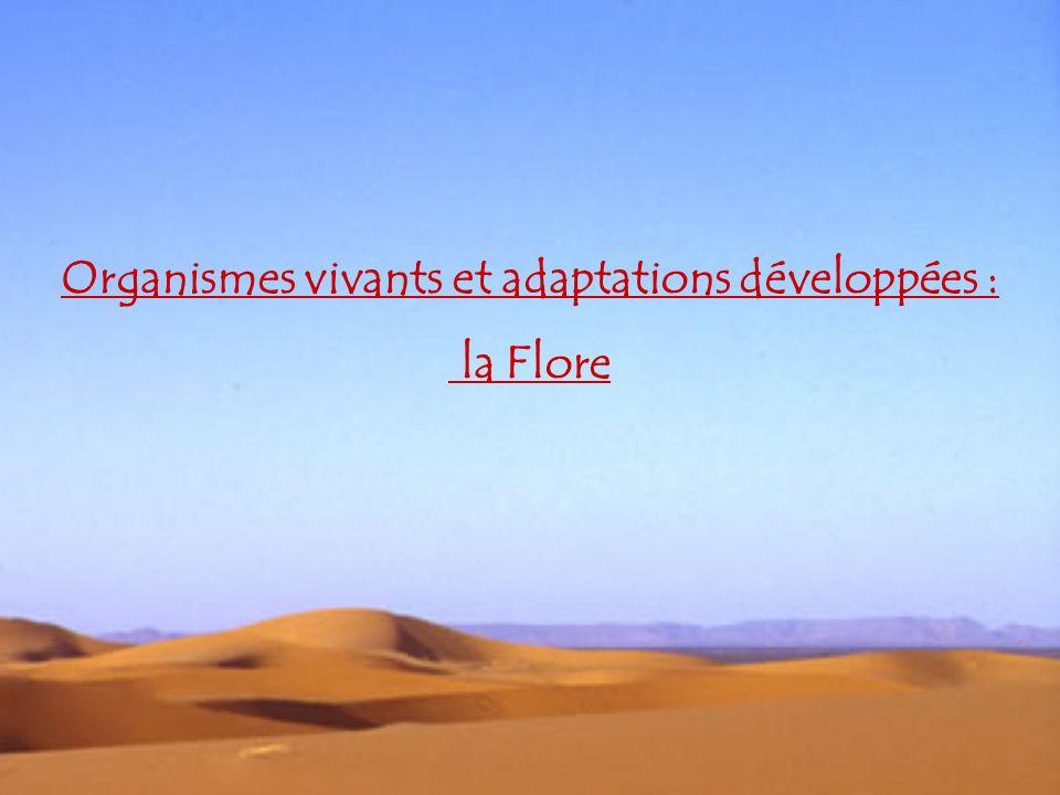 Organismes vivants et adaptations développées : la Flore