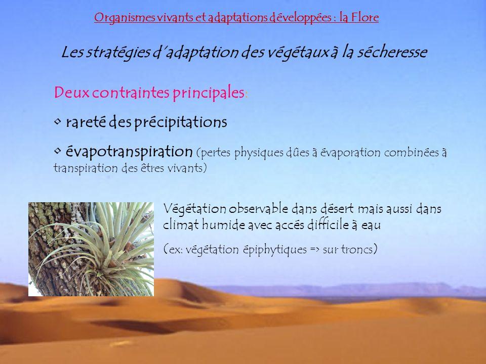Les stratégies dadaptation des végétaux à la sécheresse Deux contraintes principales: rareté des précipitations évapotranspiration (pertes physiques d