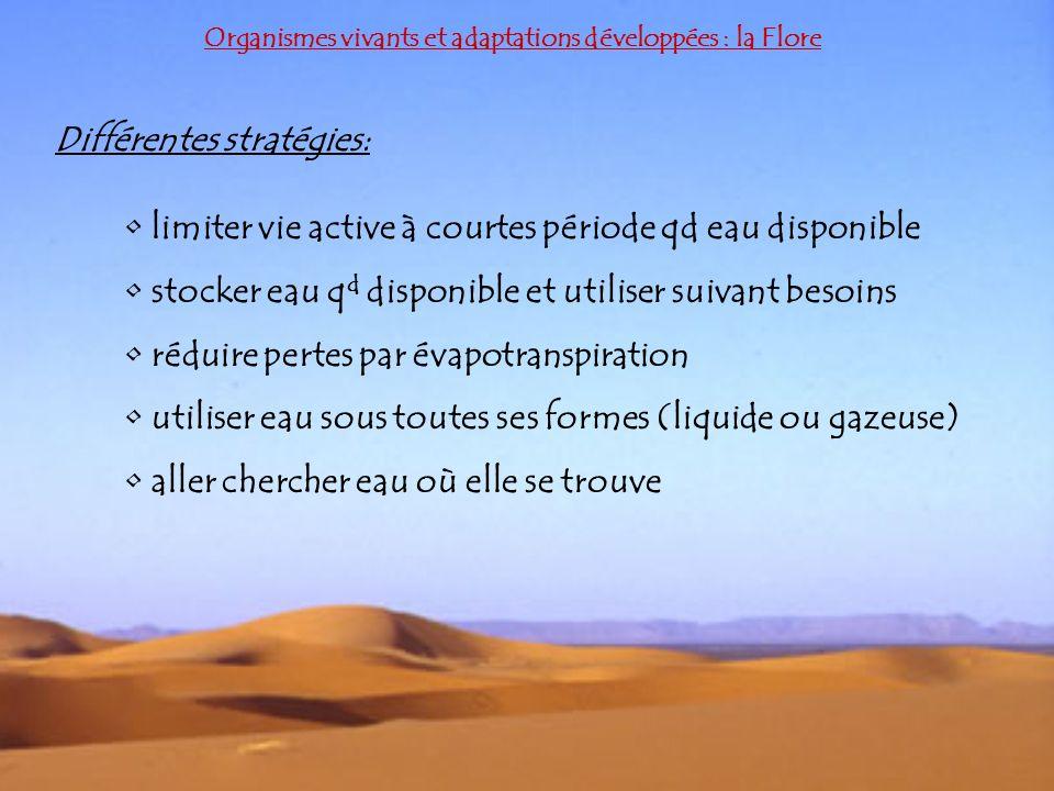 Différentes stratégies: Organismes vivants et adaptations développées : la Flore limiter vie active à courtes période qd eau disponible stocker eau q