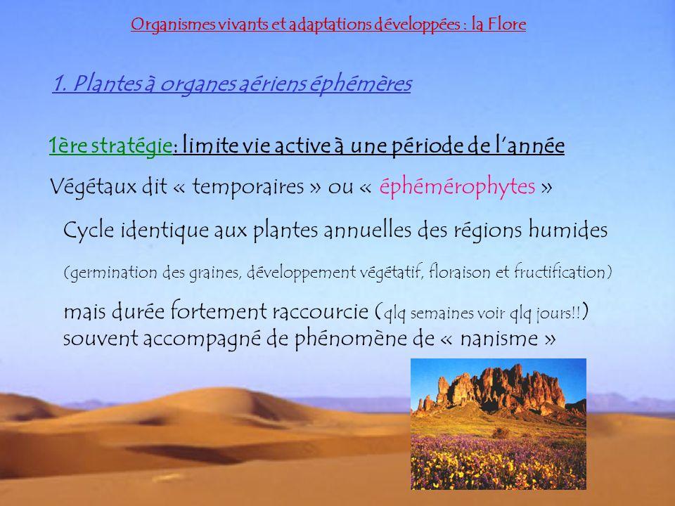 1. Plantes à organes aériens éphémères Organismes vivants et adaptations développées : la Flore 1ère stratégie: limite vie active à une période de lan