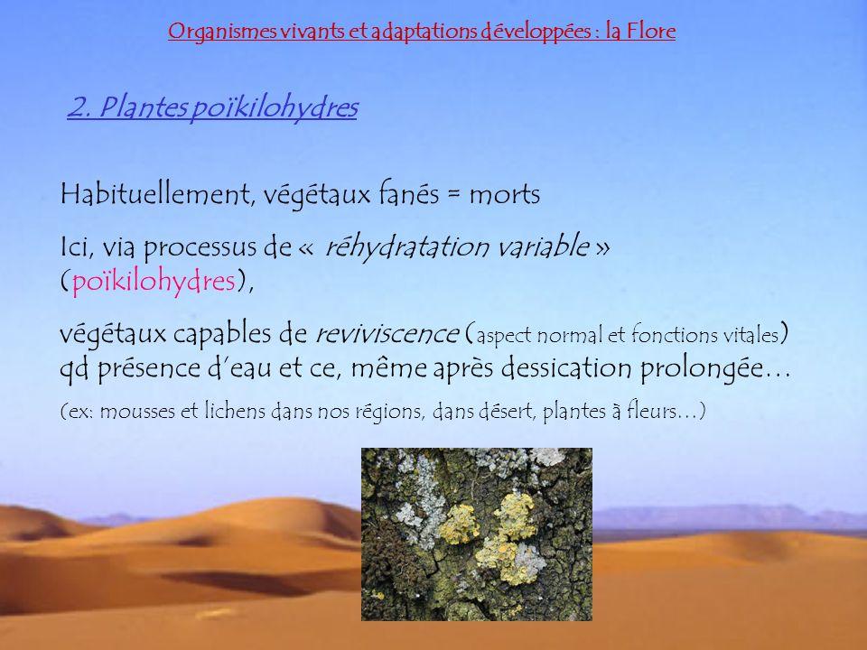 2. Plantes poïkilohydres Organismes vivants et adaptations développées : la Flore Habituellement, végétaux fanés = morts Ici, via processus de « réhyd