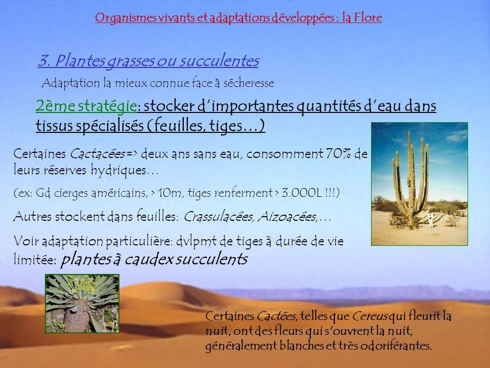 3. Plantes grasses ou succulentes Organismes vivants et adaptations développées : la Flore Adaptation la mieux connue face à sécheresse 2ème stratégie