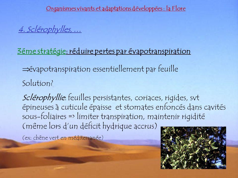 4. Sclérophylles, … Organismes vivants et adaptations développées : la Flore 3éme stratégie: réduire pertes par évapotranspiration évapotranspiration