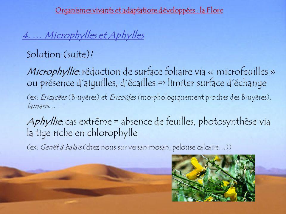 Organismes vivants et adaptations développées : la Flore 4. … Microphylles et Aphylles Solution (suite)? Microphyllie: réduction de surface foliaire v