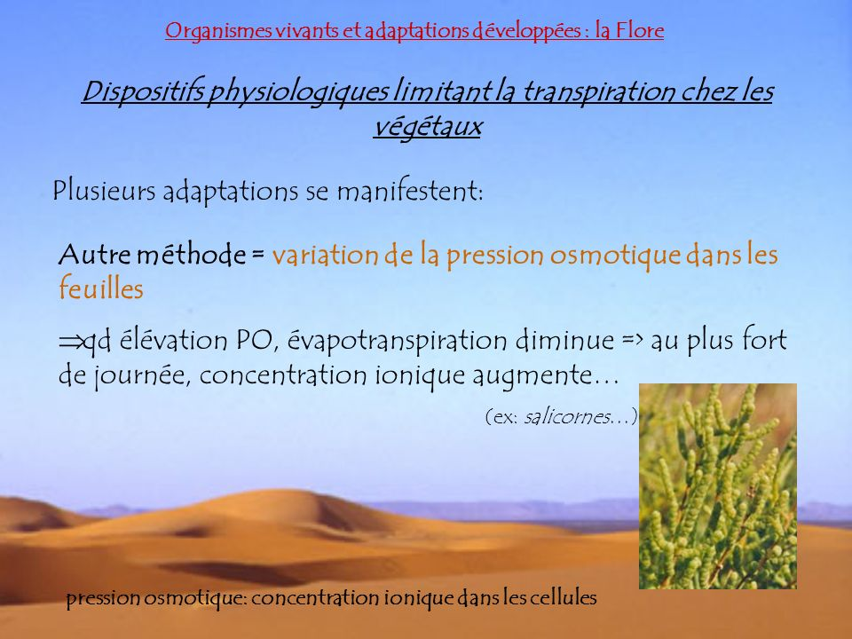 Organismes vivants et adaptations développées : la Flore Dispositifs physiologiques limitant la transpiration chez les végétaux Plusieurs adaptations