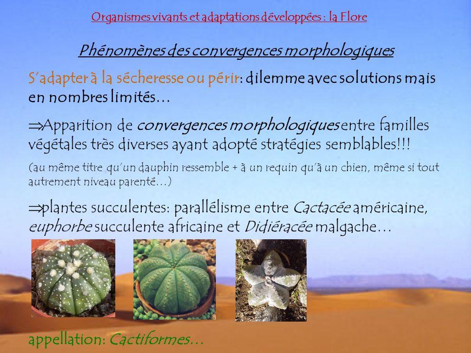 Organismes vivants et adaptations développées : la Flore Phénomènes des convergences morphologiques Sadapter à la sécheresse ou périr: dilemme avec so