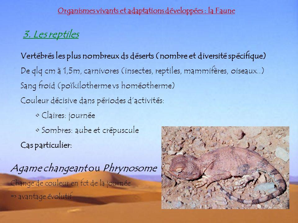 Organismes vivants et adaptations développées : la Faune 3. Les reptiles Vertébrés les plus nombreux ds déserts (nombre et diversité spécifique) De ql
