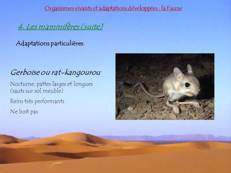 Organismes vivants et adaptations développées : la Faune 4. Les mammifères (suite) Adaptations particulières: Gerboise ou rat-kangourou Nocturne, patt